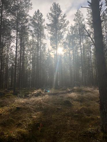 skog höstdag